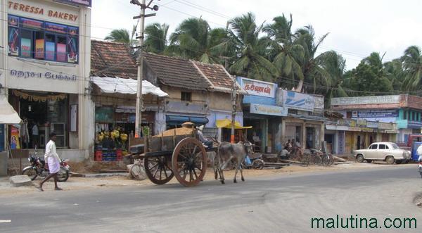 Довольно часто встречаемая картина на улицах Индии...