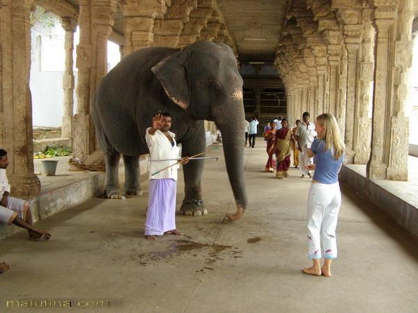 Священный слон храма...