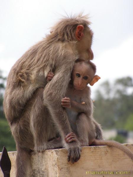 Забавные обезьянки...